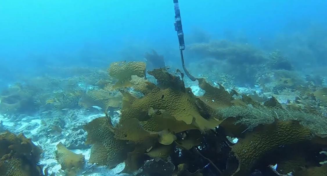 海洋生物資源の保護に配慮した収穫のイメージ